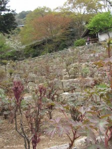 登廊からの風景(長谷寺)