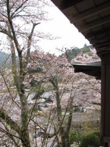 お抹茶席からの眺望(長谷寺)