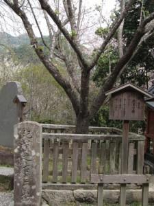 紀貫之 古里の梅(長谷寺)