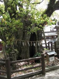 神樹(一色神社)