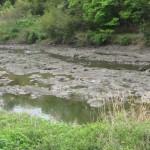岩の川床(五十鈴川)