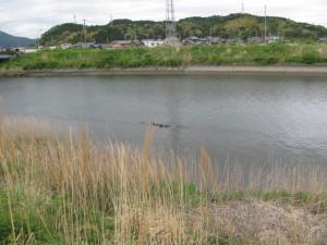 五十鈴川内の積み石(堀割橋付近)