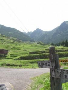 丸山千枚田へ