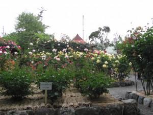 神宮ばら園