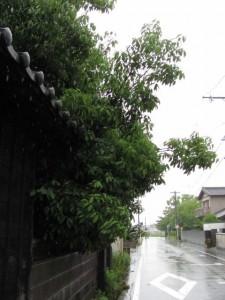 御薗神社へ