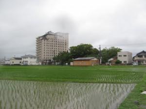 ホテルと久志本社の社叢