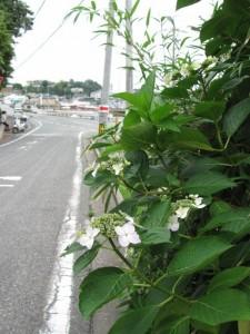 安楽島漁港へ