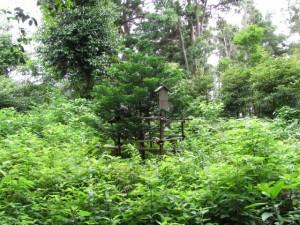 満留山神社の裏
