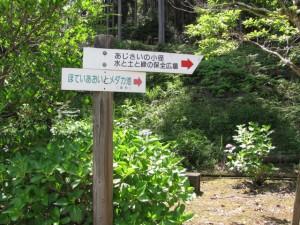 キャンプ場付近(ふれあいの森)