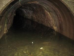 素堀のトンネル(ふれあいの森)