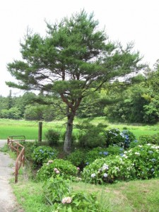 近畿自然歩道の道標付近