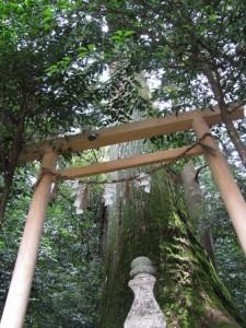 薬師堂の左奥(丹生大師神宮寺)