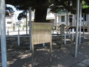 弥栄(いやさか)の松(日保見山八幡宮)