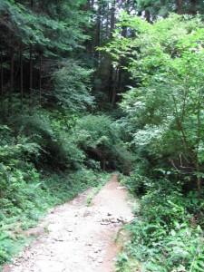 九、十丁町石への分岐付近 - 朝熊岳道