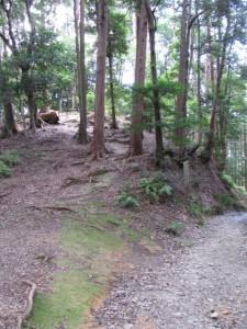 四町角柱町石(A11)付近 - 朝熊岳道