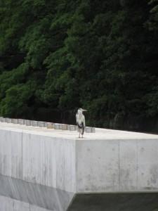 五十鈴川の新しい橋脚