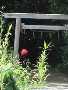 神社(花房志摩守供養碑前から御塩浜への途中)