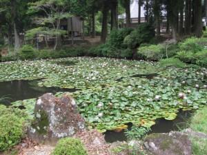 連間の池(金剛證寺)