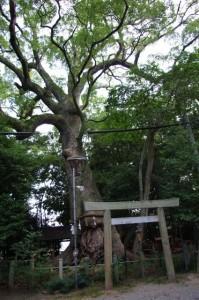 御神木 長寿樟(松阪神社)