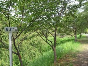 宮川右岸、度会橋から下流へ二番目の堤跡?