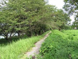 宮川右岸、度会橋から下流へ三番目の堤跡?