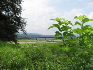宮川右岸、度会橋から下流へ二番目の堤跡?からの風景