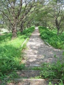 宮川右岸、度会橋から下流へ最初の堤跡?