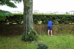 木の幹周りを測る少年(御薗神社)