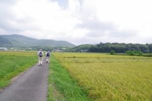神宮御料田へ