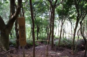 十六丁目付近の眺望岩へ - 青峰道(松尾道)