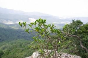 眺望岩からの眺望 - 青峰道(松尾道)