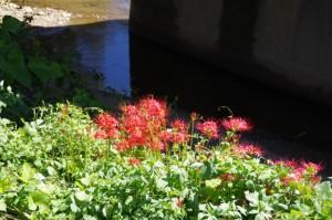 外城田川に架かる橋(吉祥庵手前)付近