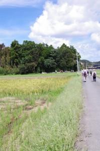 湯田神社の社叢