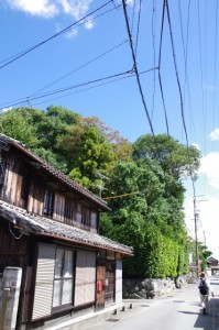 小俣神社の社叢