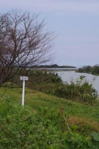 魚見橋へ(櫛田川左岸)