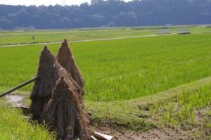 智光院称名寺付近の風景