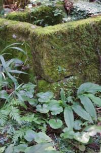 お城井戸(大仰城跡)