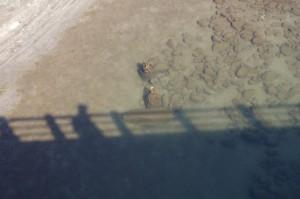 雲出川の中の木柱?(大仰橋下流側)
