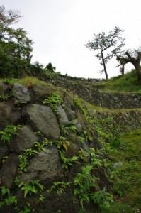 鳥羽城三ノ丸広場から望む多段の石垣