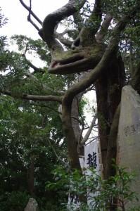 龍神さん(美多羅志神社)