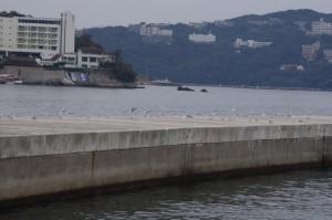 鳥羽港(佐田浜)