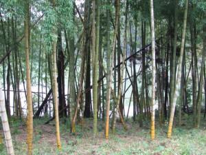 牛尾崎池付近の竹林