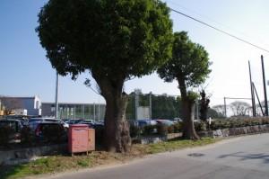 松阪市嬉野地域振興局(旧 嬉野町役場)
