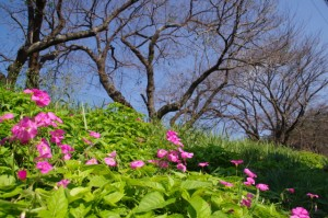 (×須賀)須加神社への路地