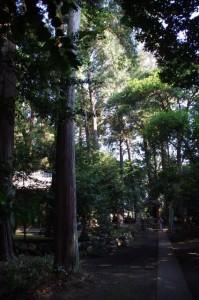 (×須賀)須加神社(み歴マ 初瀬 10)