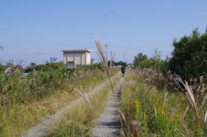 巡見橋(三渡川)へ