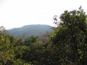 大黒石から十町角柱町石(?)へ - 宇治岳道