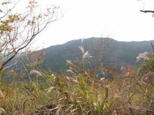 十町角柱町石(?)から下る途中 - 宇治岳道