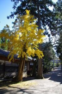 南参道(大村神社)