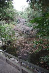 ワタカ棲息 鏡池(石上神宮)